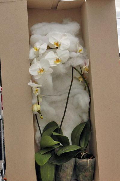 орхидеи в коробке для транспортировки