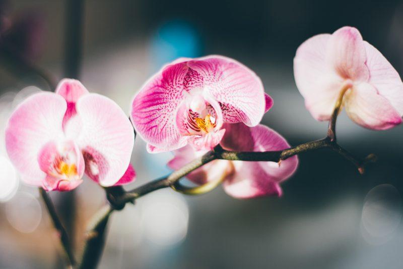 уход за орхидеей в домашних условиях