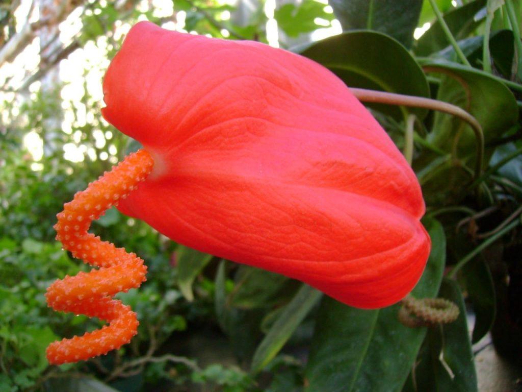 Самые дорогие комнатные цветы фото и название