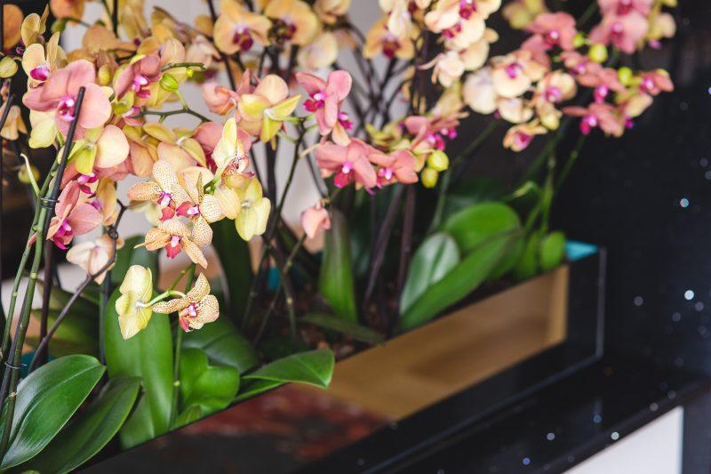 розовые и желтые орхидеи