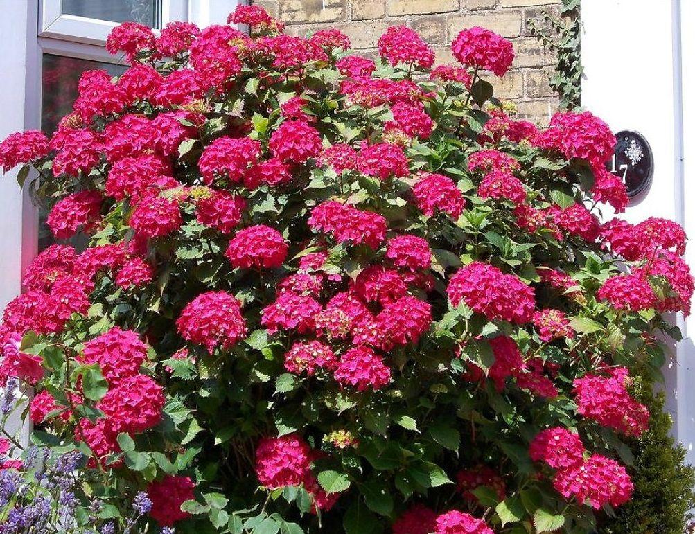 Красивые картинки на фон с розами умею