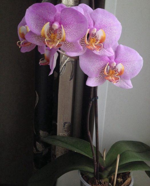 орхидея в тени