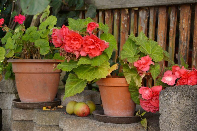 Растения, нуждающиеся в пересадке