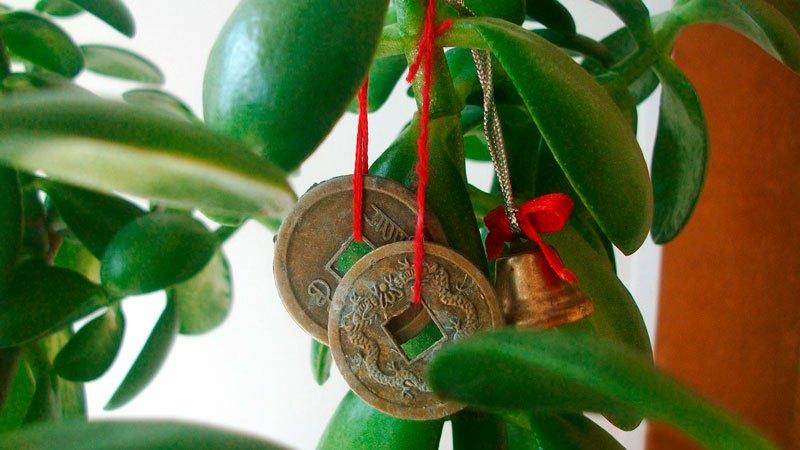 Талисманы для привлечения богатства, которыми часто украшают денежное дерево.