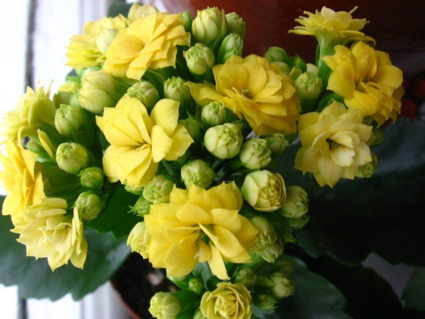 Повторное цветение