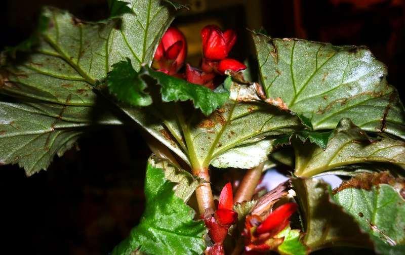 Появление пятен на листьях