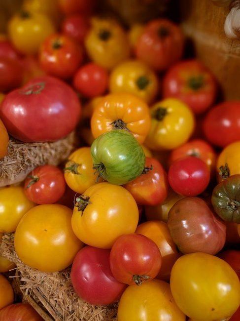 Томат Сестренка F1: отзывы об урожайности, характеристика и описание сорта, фото куста