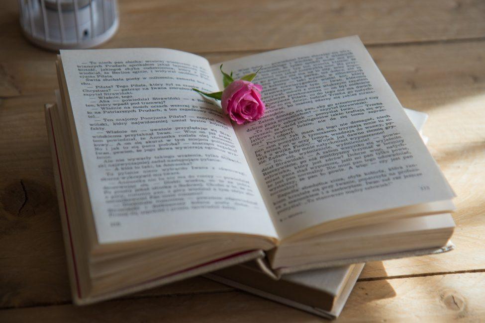бутон розы на книге