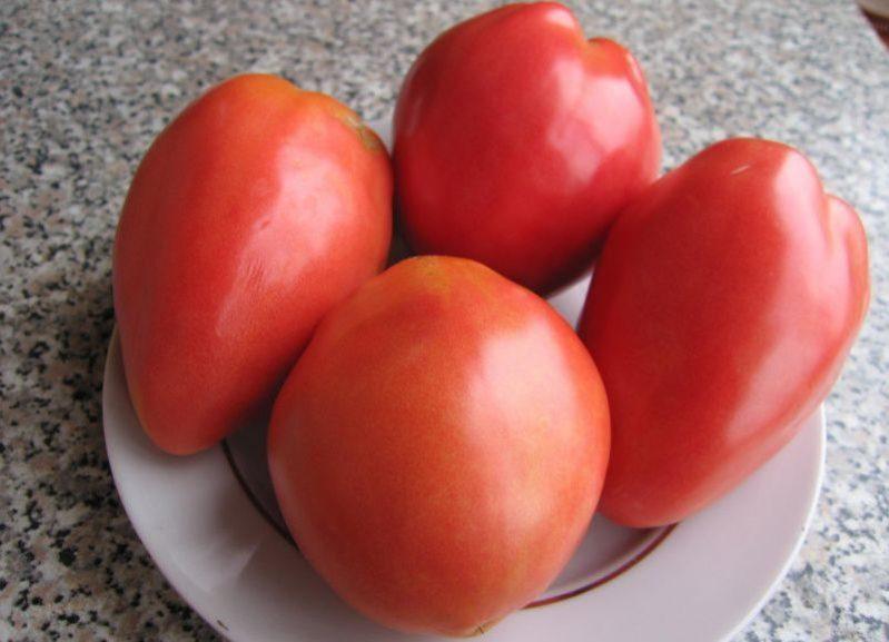 Вельможа томат