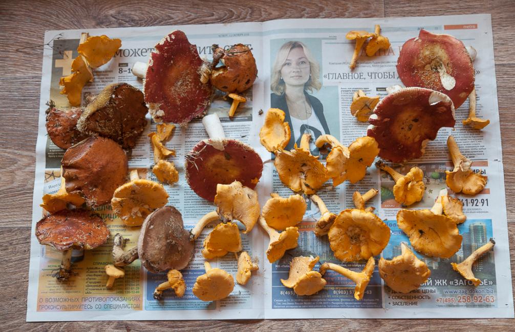 грибы выложенные на газету