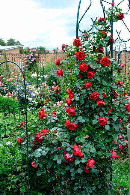 Вход в сад приобретет некоторую загадочность.