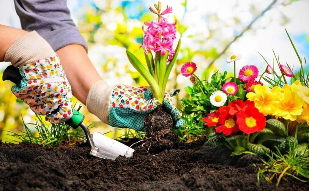 Исходя из ваших пожеланий, вы можете собственными руками создать цветник своей мечты.