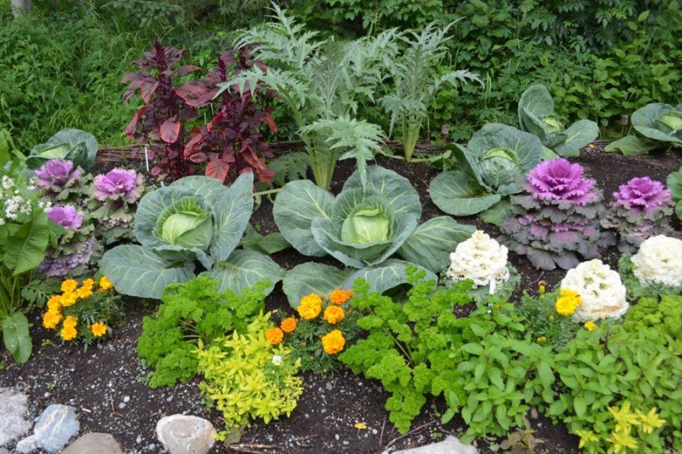 Комбинирование овощей и цветов