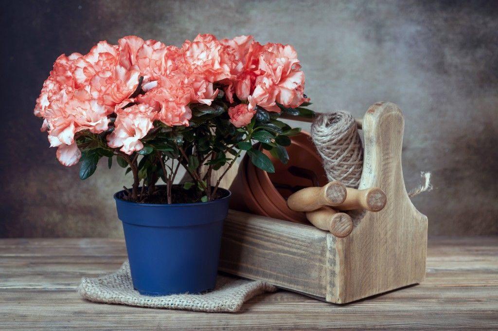 Фото цветов и абстрактные