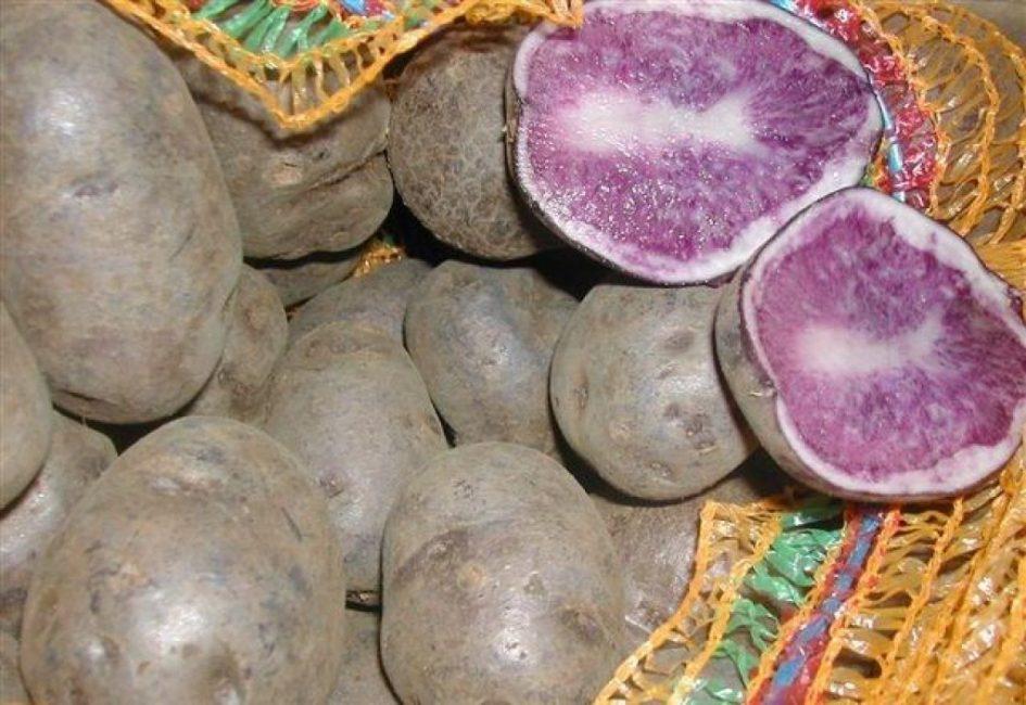 Гурман картофель