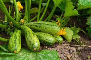ТОП-9 Рецептов вкусных салатов из кабачков на зиму: «Пальчики оближешь»
