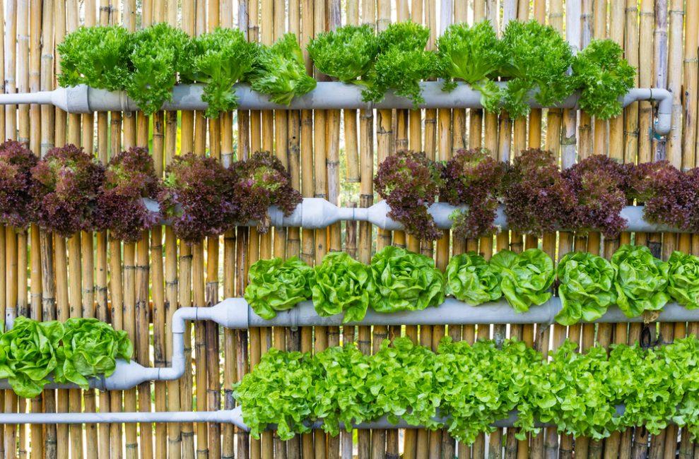 Овощная вертикальная клумба