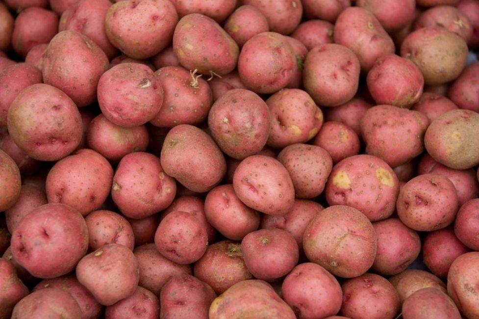 Вольтман картофель