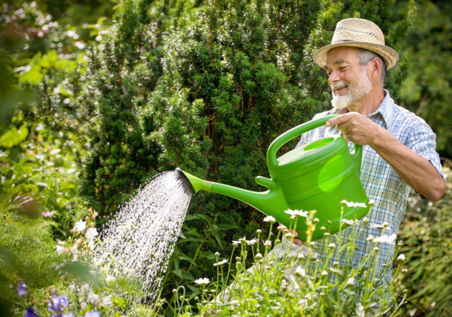Мужчина поливает растения в саду