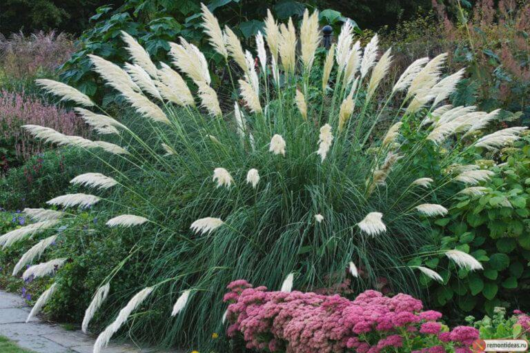 Красиво смотрятся в миксбордерах многолетние злаковые травы.