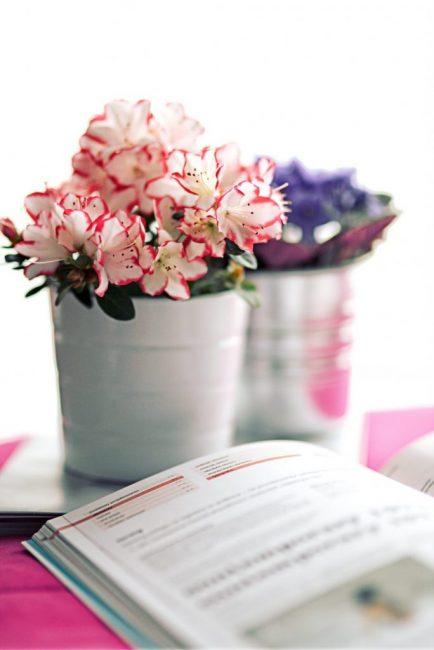 Содержание в прохладном помещении позволит продлить срок цветения
