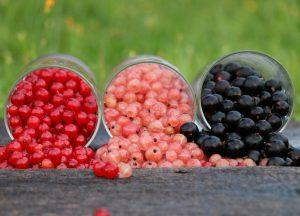 Смородина: описание 22 отборных сортов с ФОТО +отзывы огородников