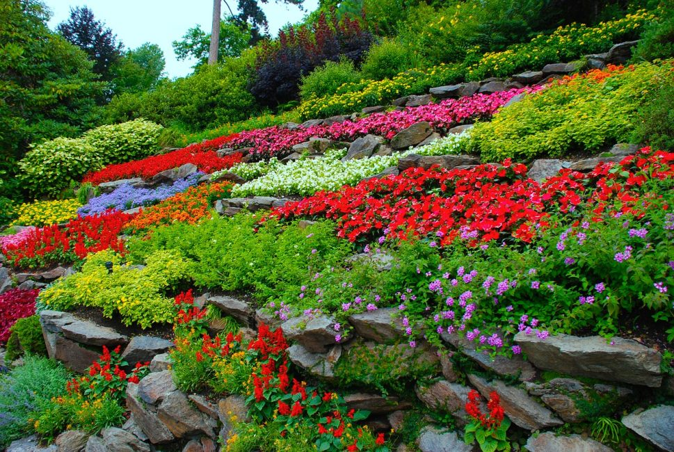 Альпийская горка из цветных цветов и камней