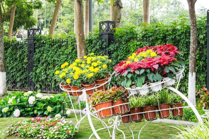 цветы многолетние фото и названия