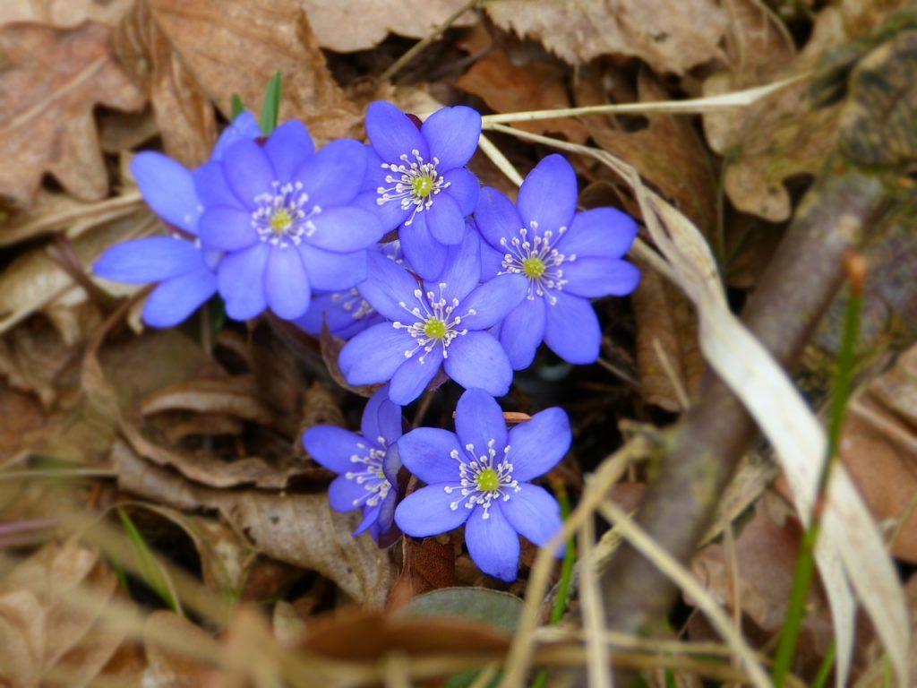 Фото и название ранних садовых цветов