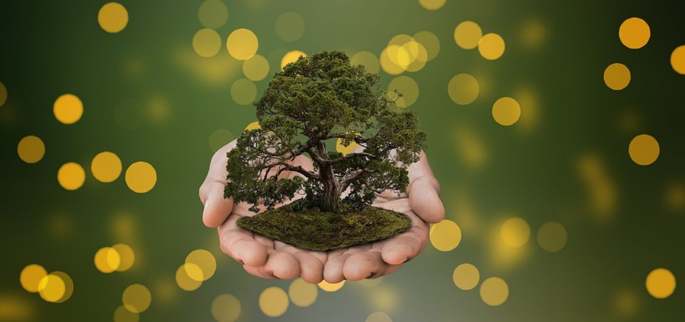 маленькое дерево в руках человека