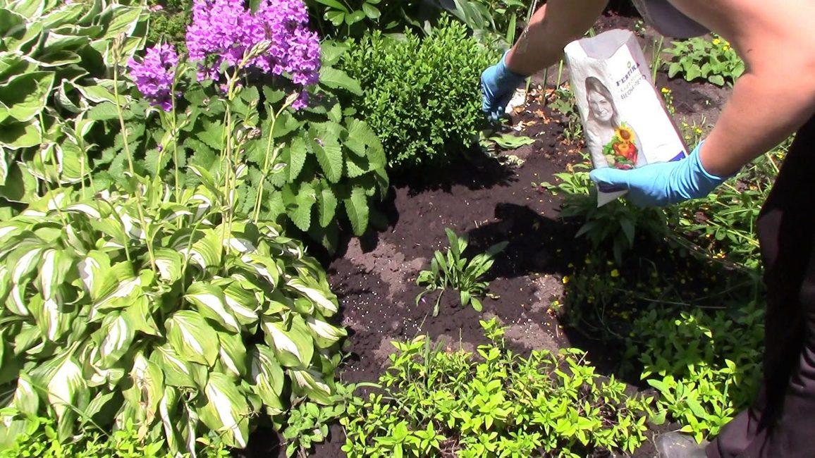 Подкормка многолетних растений