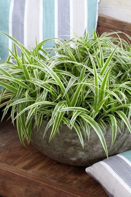 Внешний вид здорового растения