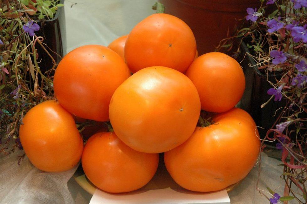 Дина сорт томатов