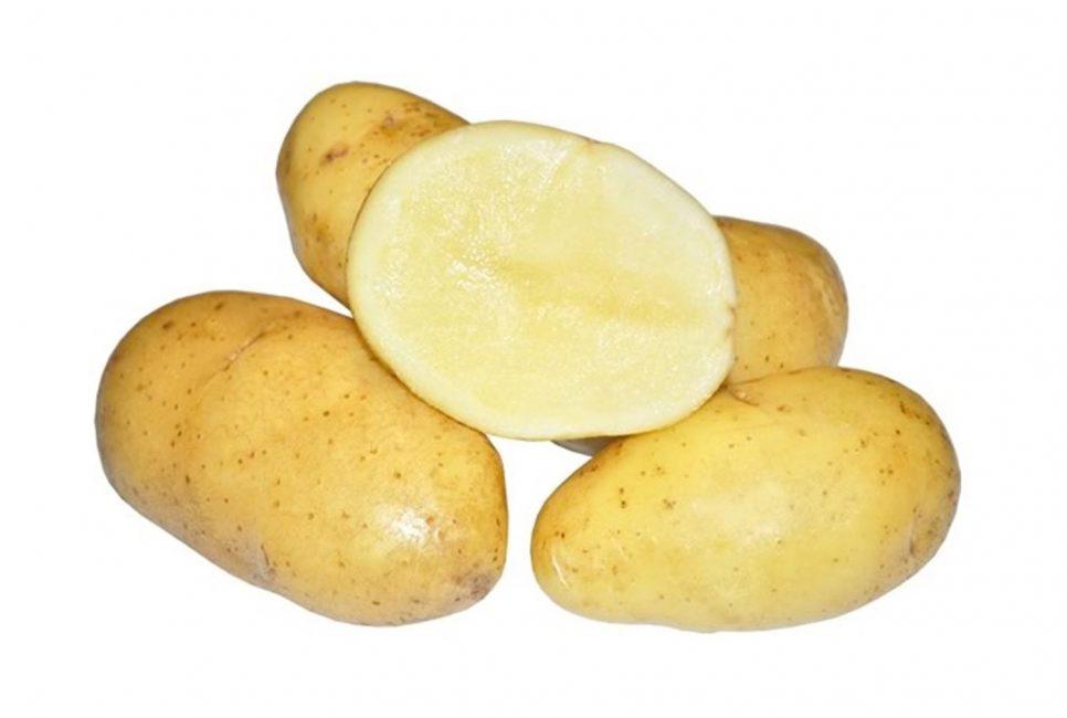 картофель Колета