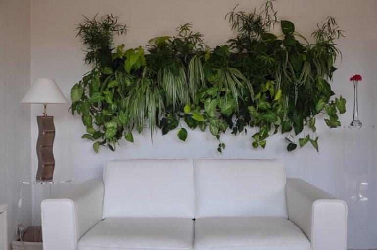 Пример озеленения комнаты полезными растениями