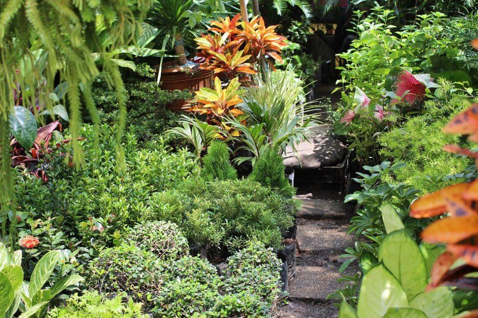 Клумба из почвопокровных растений вдоль садовой дорожки