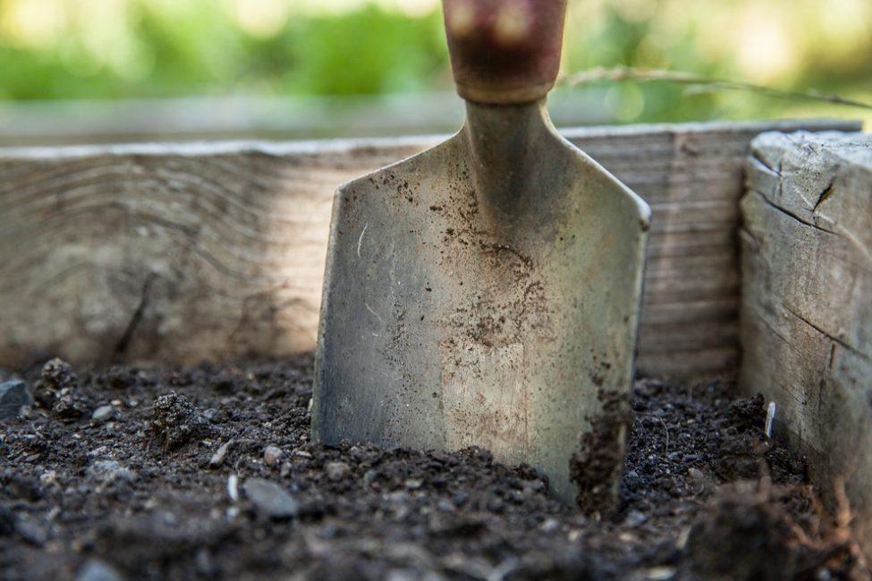 Желательно подготовить почву за 3 - 5 недель до посадки цветов на клумбе