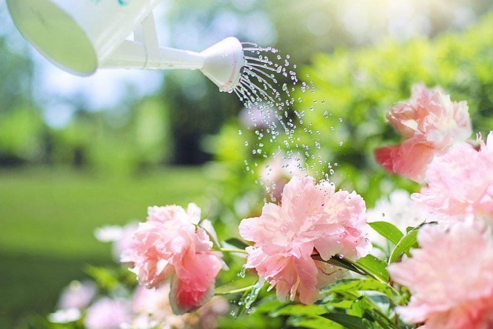 Лучшее время полива - раннее утро