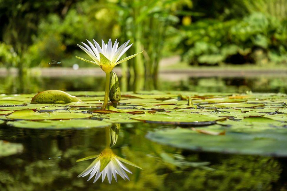 Маленький пруд станет жемчужиной дачного участка