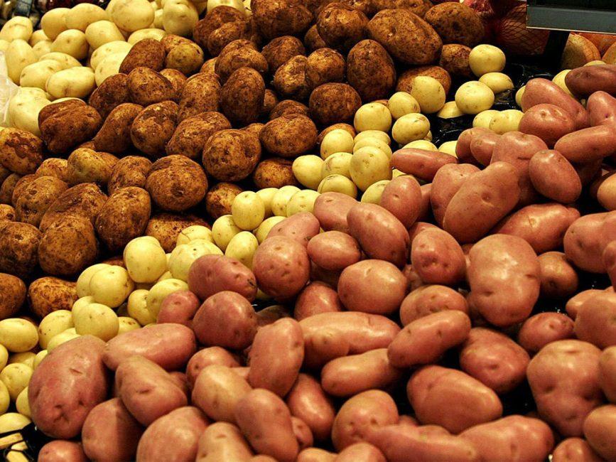 Существует огромное количество разновидностей картофеля.