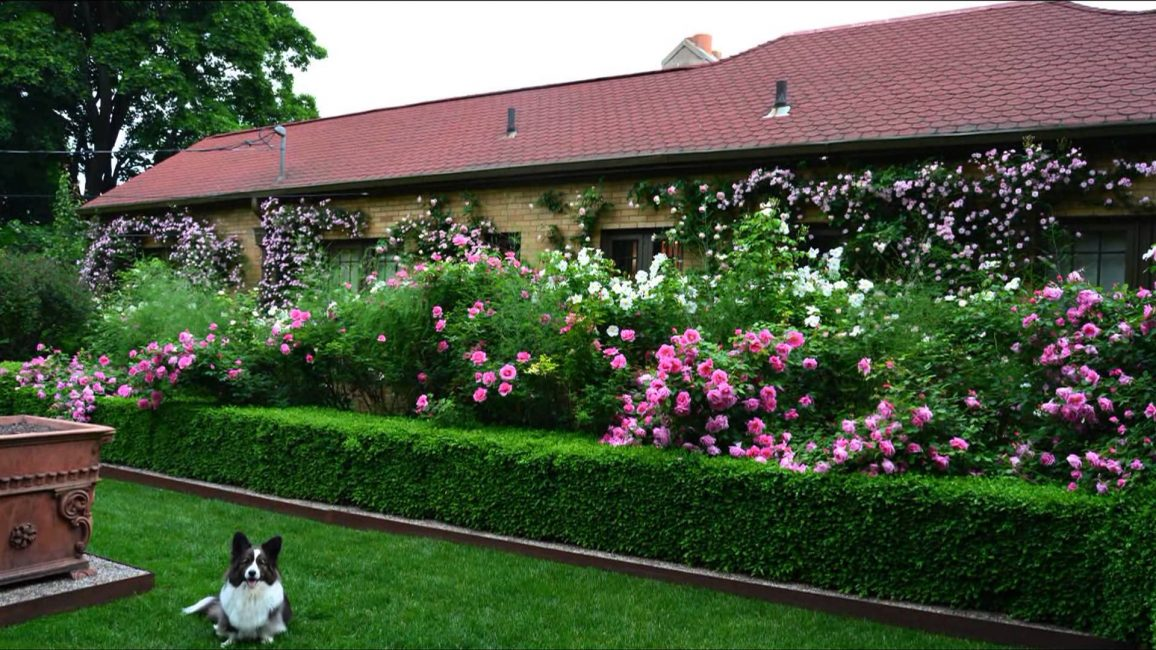 Используйте для этого натуральные изгороди из кустов, арки, малые архитектурные формы.