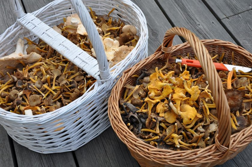 грибы на зиму рецепты
