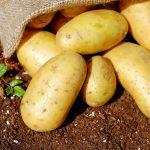 картофель описание сортов фото