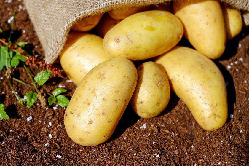 Неприхотливый в уходе и высокоурожайный сорт картофеля Агата