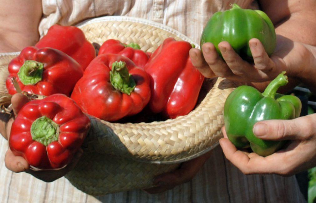 перец болгарский зеленый и красный