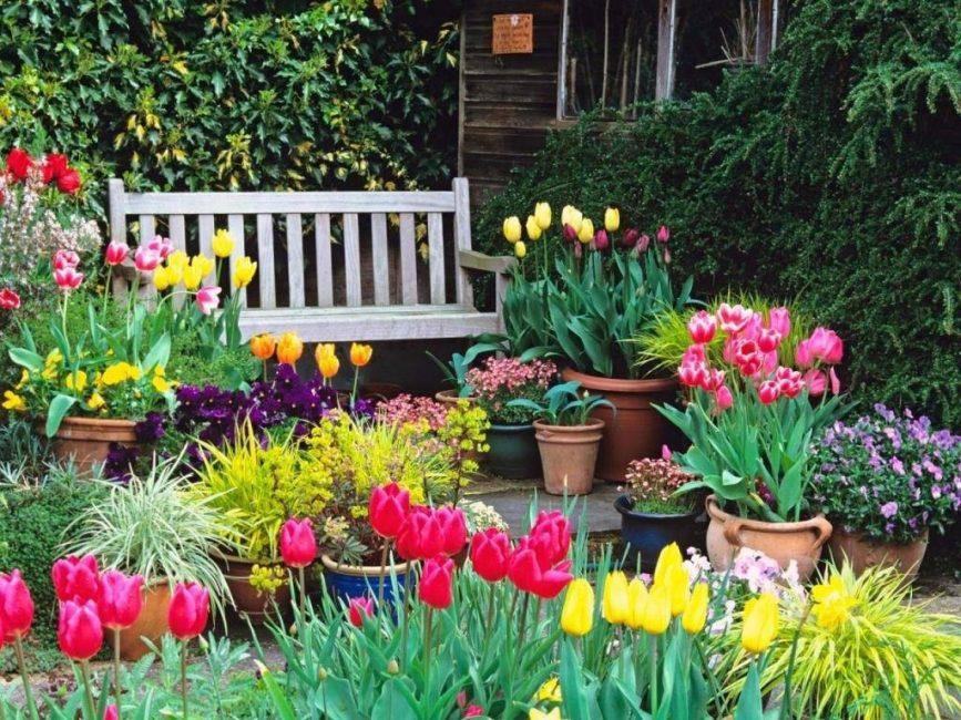 тюльпаны растущие во дворе