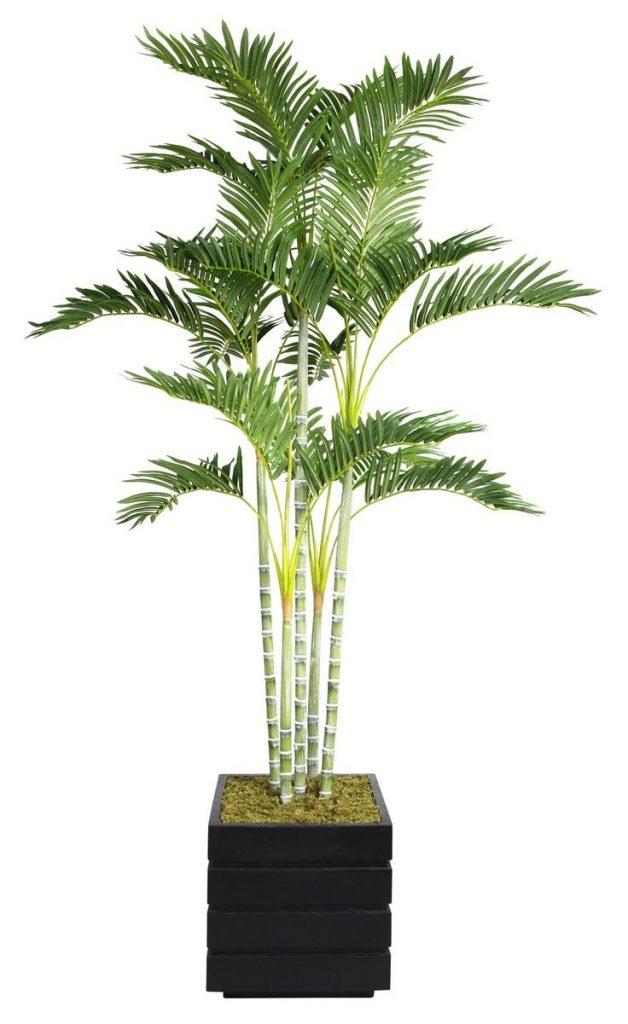 Финиковая пальма из косточки — выращивание и уход в домашних условиях, фото, видео