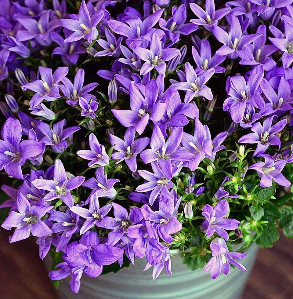 Цветы для клумб описание и фото