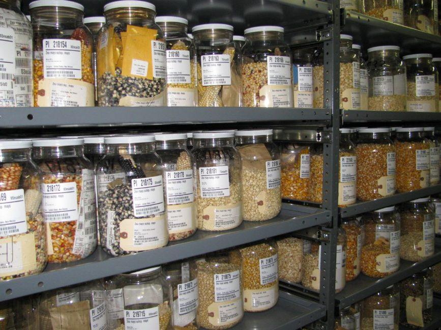 хранение семян в холодильной камере