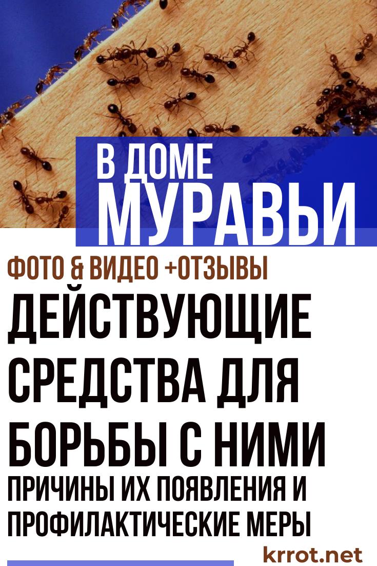 Как и чем травить муравьев в доме или квартире